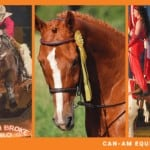 Kodiak at Can-Am Equine Expo 2020